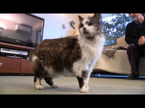 31 Year Old Cat May Be NZ's Oldest   Stuff co nz Mp3