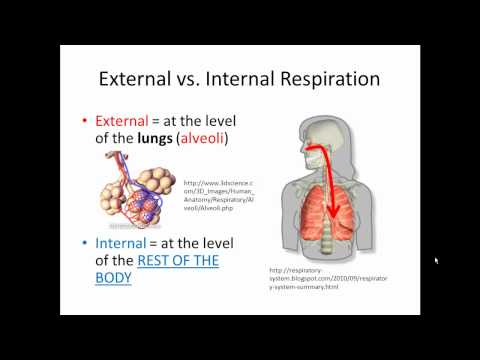 External and Internal Respiration (Gas Exchange) SIMPLIFIED!!!