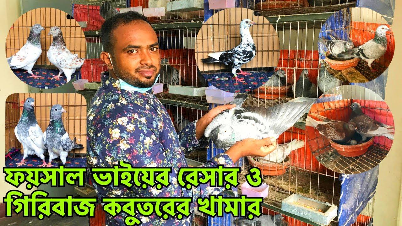 ফয়সাল ভাইয়ের রেসার হোমার ও হাইফ্লায়ার কবুতরের খামার || Pets & Birds || Racer Pigeon Farm (V - 282)
