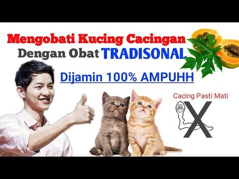 tips-mengobati-kucing-cacingan-dengan-obat-tradisional.