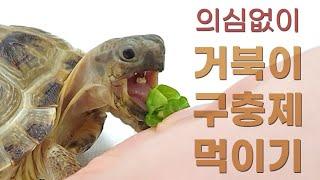 호스필드 육지거북 구충하기!  옴니쿠어로 거북이 구충하…