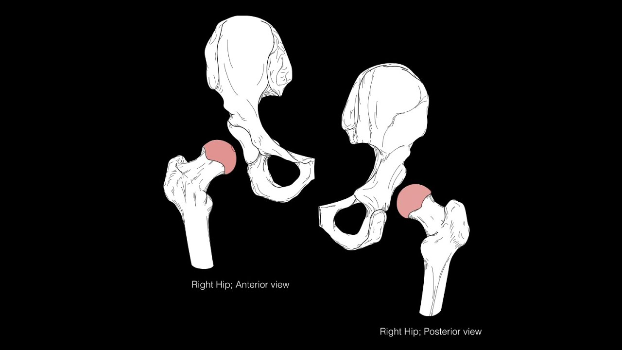 Hip joint structure and actions - YouTube