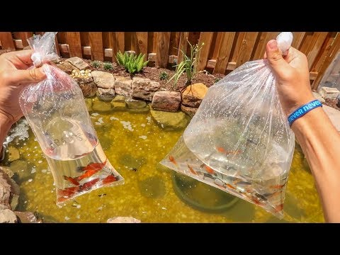 BUYING 50+ COLORFUL FISH for MINI POND!!!