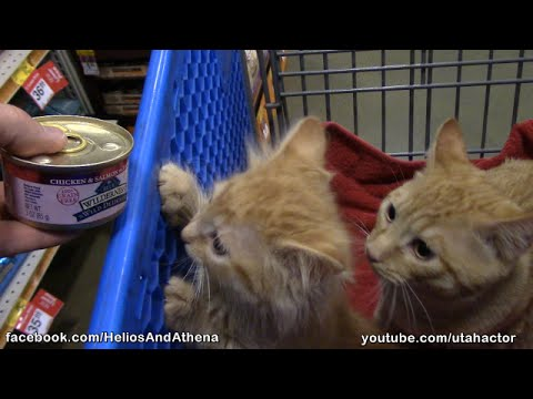 #Cute Ginger #Kittens Visit #PetSmart When the Lights Go Out!!