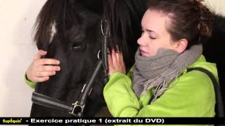 Comment vermifuger son cheval - Clinique Equine de Meslay