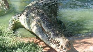 Опасно для Жизни! Ныряем с Морским Крокодилом