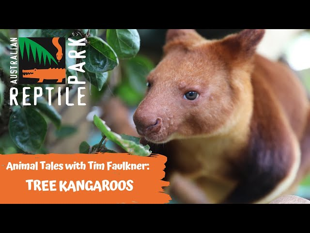 ANIMAL TALES WITH TIM FAULKNER | EPISODE 33 | TREE KANGAROOS