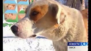 В Омске раненая собака несколько часов провисела на заборе