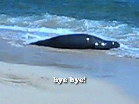 Hawaiian Monk Seal!!! | iJustine