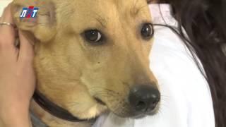 День ветеринарного врача(, 2016-05-01T21:28:49.000Z)