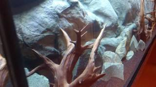 225 gallon aquarium with juvenile african cichlids