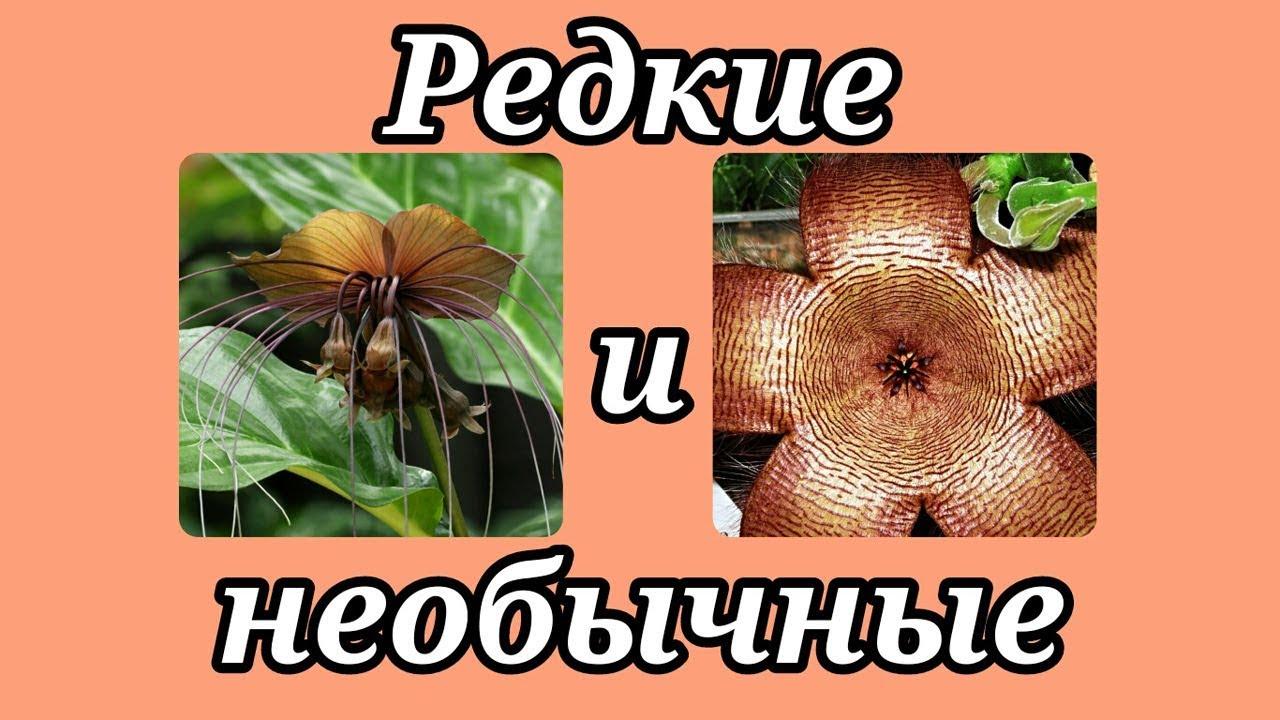 Домашние цветы энциклопедия фото и уход