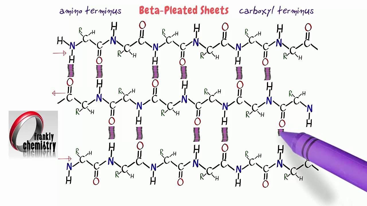 small resolution of the beta pleated sheets secondary structure of proteins youtube