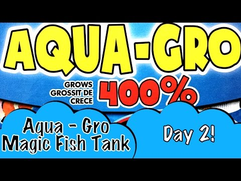day-2-aqua-gro-magic-fish-tank-with-fishes-that-grow-4x-bigger-just-add-water-like-dino-eggs