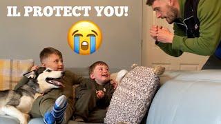 Will My Huskies Protect My Kids Prank!? [MALE V FEMALE V PUPPY!]