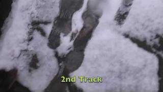Kelpie Puppy Tracking In The Snow