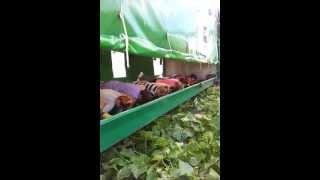 Traktor i samolot, kombajn do ogórków / Ebene für Gurken / plane for cucumbers