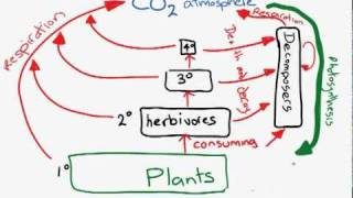 The Carbon Cycle.mp4