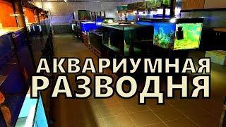 Аквариумная ферма в странах Балтии. Разведение аквариумных рыбок.