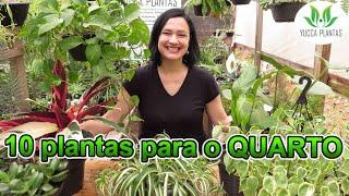 10 Plantas Para Deixar Seu Quarto Maravilhoso