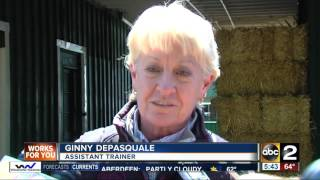 """Always Dreaming"" arrives at Pimlico for Preakness Stakes"