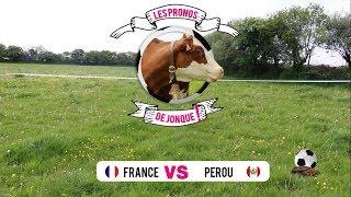 France - Pérou : Jonque, la vache fait ses pronostics pour la Coupe du Monde de foot 2018