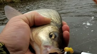 Вот это клёв.Последняя рыбалка Октября 2019.