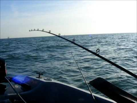 Whiting and cod fishing youtube for Whiting fish florida