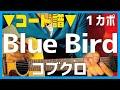 Blue Bird Kobukuro