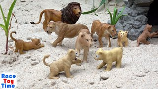 Lots of Safari Animals Toys Collection - Learn Wild Animal Names For Kids