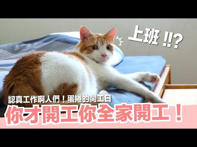貓咪開工日!蛋捲的工作真的很辛苦!【好味貓日常】EP34