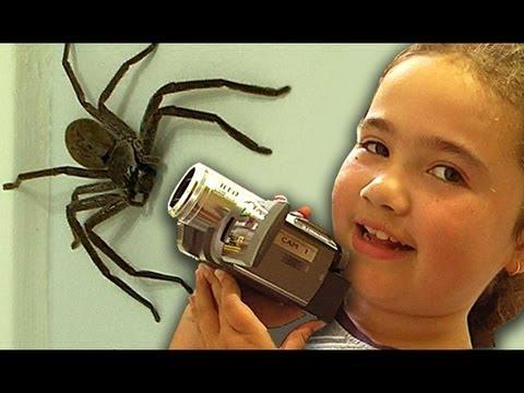 Big Spider Nerf Gun Attack Dyson DC39 Vacuum Capture Kids React Slowmo Study