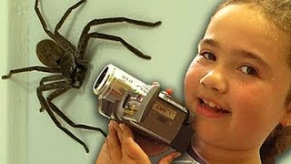 Big Spider Nerf Gun Dyson DC39 Vacuum Capture Kids React Slowmo Study