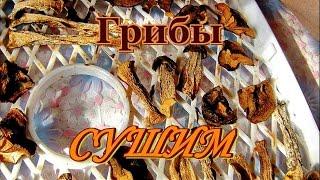 Грибы сушим. Видео рецепты от бабки (Борисовны).