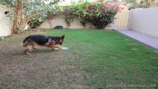 Dog Training Tutorial: Off-leash Exercise (send-off)