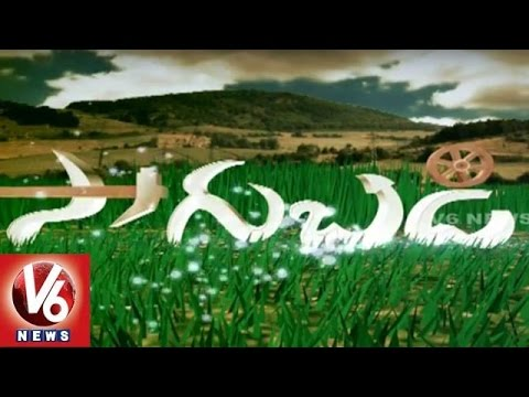 Sagubadi | Modern Technology in Paddy Crop Farming  | Agriculture News | V6 News