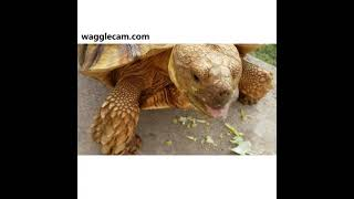 OMG Tortoise: A Funny Compilation