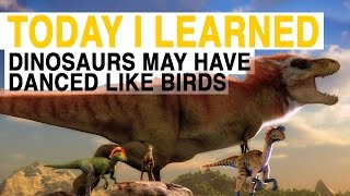 TIL: Dinosaurs May Have Danced Like Birds | Today I Learned