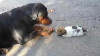 Характер любой собаки зависит от воспитания