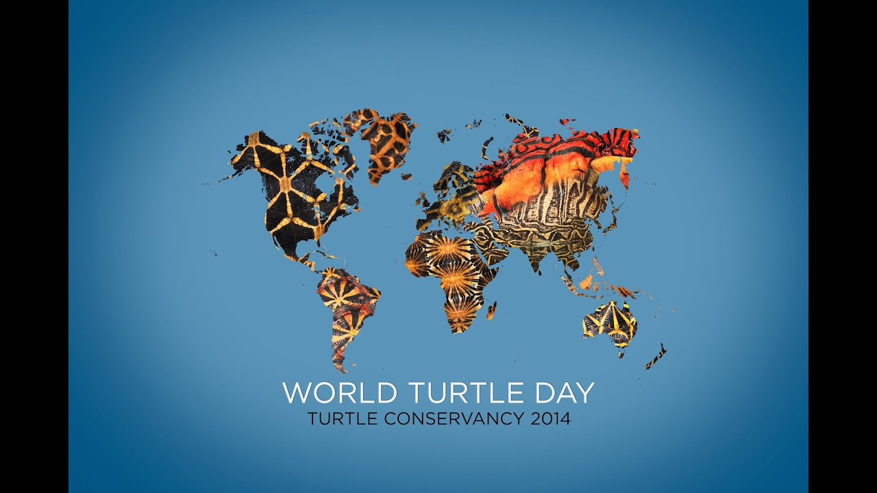 "world turtle day May 23 is world turtle day, an annual event created to celebrate and increase awareness of turtle species around the world ""turtles are not as popular as cats and."