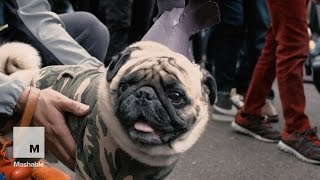 21 Puppy Costumes at the Halloween Dog Parade  | Mashable
