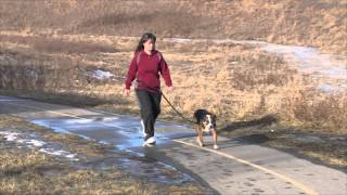 Paskapoo Pet Services - Sait Short Tv Commercial - Dog Walking, Pet Sitting Calgary Nw