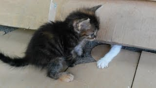 Little kittens playing so cute