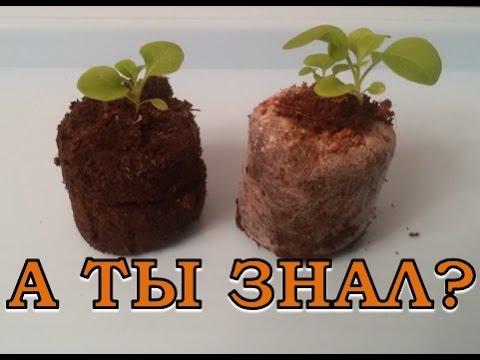 ПЕТУНИЯ: выращивание в торфяных таблетках