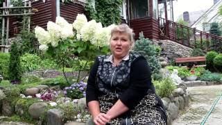 видео Гортензия комнатная, садовая, метельчатая. Уход за гортензией.  Гортензия древовидная, крупнолистная и черешковая. Выращивание, обрезка и посадка гортензий.