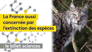 Les disparitions d'espèces sauvages, aussi en France