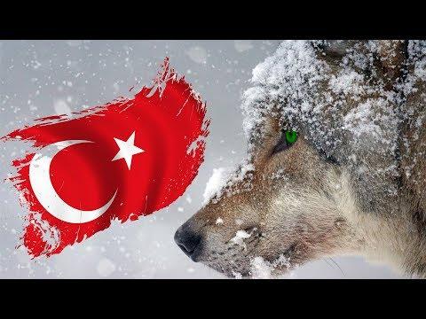 Türkiyede YAŞAYAN En VAHŞİ 10 Hayvan
