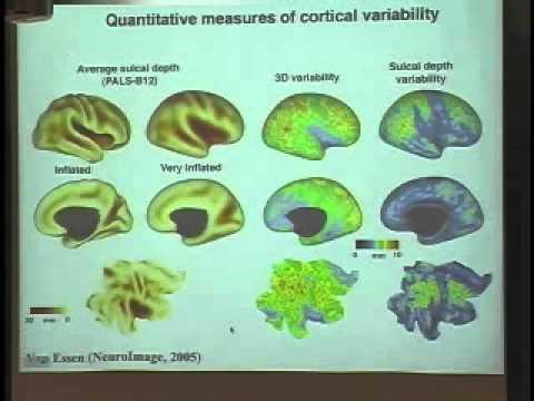 Structure, function, and development of cerebral cortex: neuroimaging - David van Essen