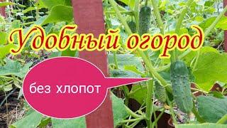 Удобный огород без хлопот.Выращивание огурцов на шпалере.Мульчирование соломой.Отдельные грядки. САД
