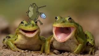 В. Бианки.  Голубые лягушки